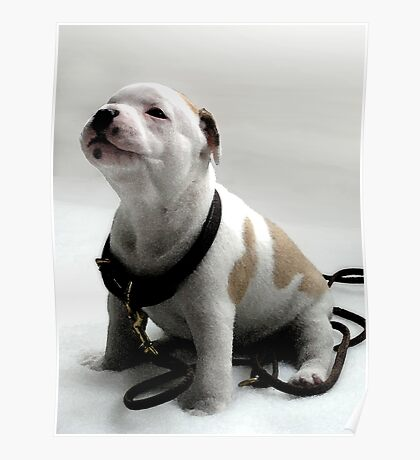 Staffordshire Bull Terrier Puppy, Watercolor Style Art Print Poster