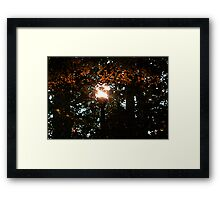 Finding the Street Lamp Among the Leaves Framed Print