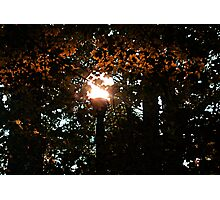 Finding the Street Lamp Among the Leaves Photographic Print