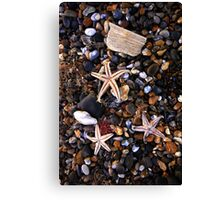 Beached Starfish  Canvas Print