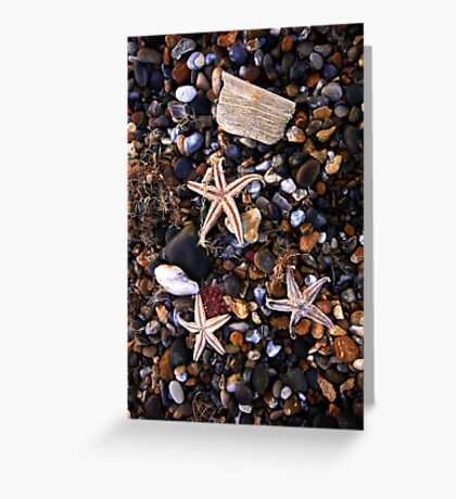 Beached Starfish  Greeting Card