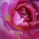 Rose Heart by LisaRoberts