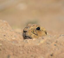 Peeking Out by Kathleen Brant