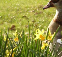 Spring Goose Sticker