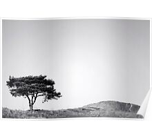 Solitary Tree Poster