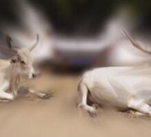 Senegal Steer Sticker