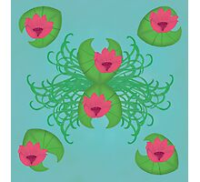 Lily Pads and Pink Flowers Photographic Print