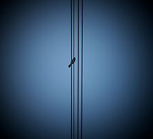 Bird on a wire by milo1262