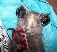 HIP HOP KITTY? by tomcat2170