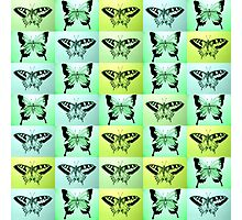 Green butterfly fantasy Photographic Print