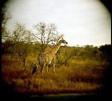 Girafe patterns by Melissa Ramirez