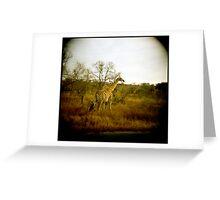 Girafe patterns Greeting Card