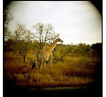 Girafe patterns Photographic Print