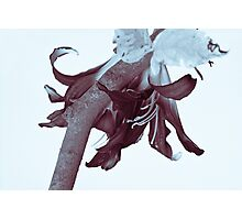 Lily of the Tree Photographic Print