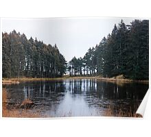 Photo of Tree Lined Lake Poster