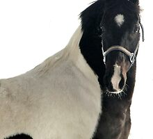 Retired Show Horse by Fareday