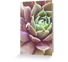 Purple Succulent Greeting Card