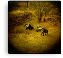 Baby Hyenas Canvas Print
