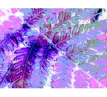 Fern in Pastel Photographic Print