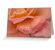 Rose petals in the rain Greeting Card