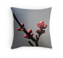 Signs of Spring - 2 Throw Pillow