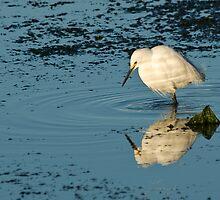 Snowy Egret by David Jones