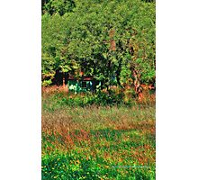 Noojee cottage amongst the trees Photographic Print