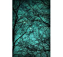 Beautiful Darkness - Half-Moon in the Trees Photographic Print