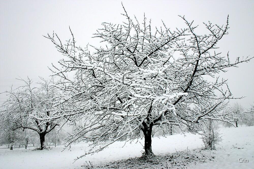 Winter Wonderland by Corrine Symons