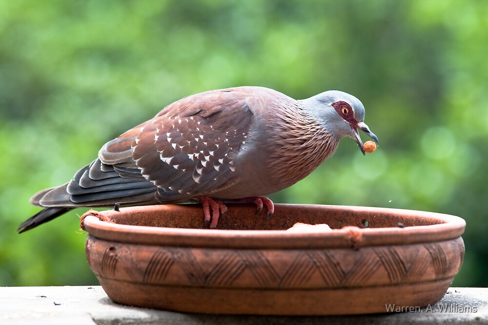 Pigeon & The Cat Pellets by Warren. A. Williams