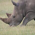 Wildlife Grazing by Amie Swannell