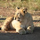 Wildlife Laying Simba by Amie Swannell