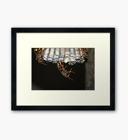 Wasp is That Framed Print