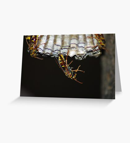 Wasp is That Greeting Card