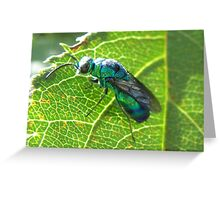 Bee,Fly,Wasp. Im not sure. Greeting Card