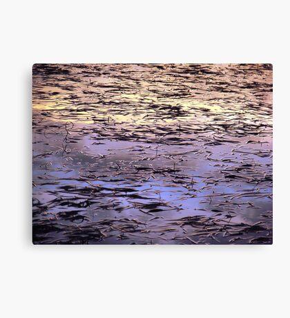 Magical Seagrasses Canvas Print