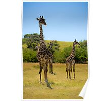 Giraffing Around Poster