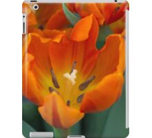 tulips in bloom iPad Case/Skin