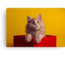 The Cat in the Red Box Canvas Print