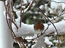 We've Got Snow! Yipeeee! by DonDavisUK