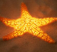 Glowing Starfish by Roger Otto