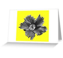 Winter Flower Greeting Card