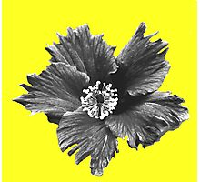 Winter Flower Photographic Print