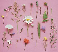 Wild Flowers by Cassia