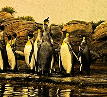 King Penguins by Robert Abraham