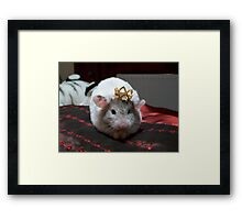 King hammy Framed Print