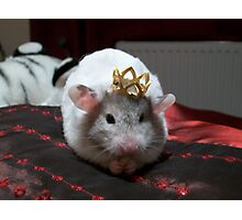 King hammy Photographic Print