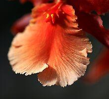 Orchid Ruffles by Deborah  Benoit