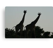 Wildlife Giraffe Siloette Canvas Print