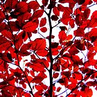 Vibrant Autumn Leaves by Honor Kyne